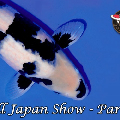 All Japan Show Part 2
