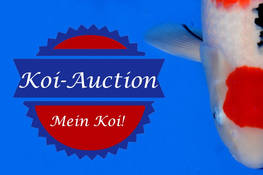Koi-Auction-mein-koi