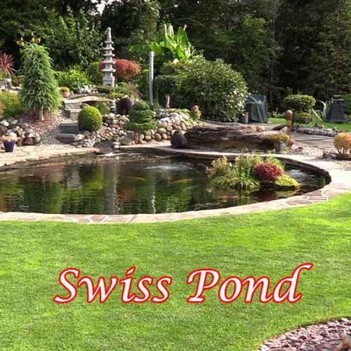 Swiss Pond
