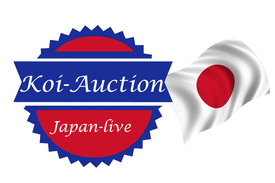Koi-Auction-japan