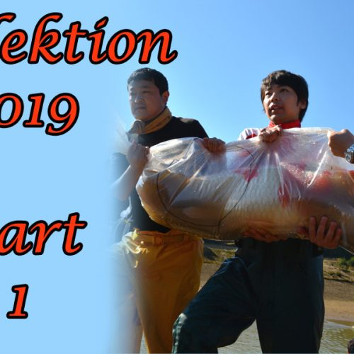 Japan-Koi-Selektion 2019 – Part 1