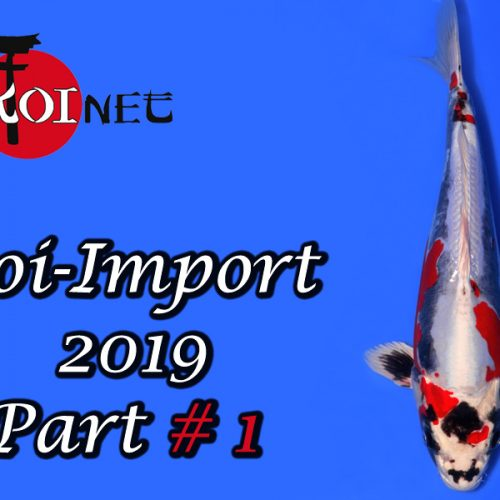 Koi-Import 2019 Part #1