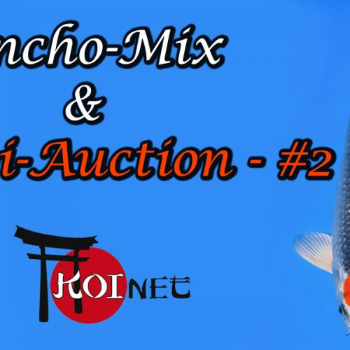Koi-Auction #2 / Tancho-Mix