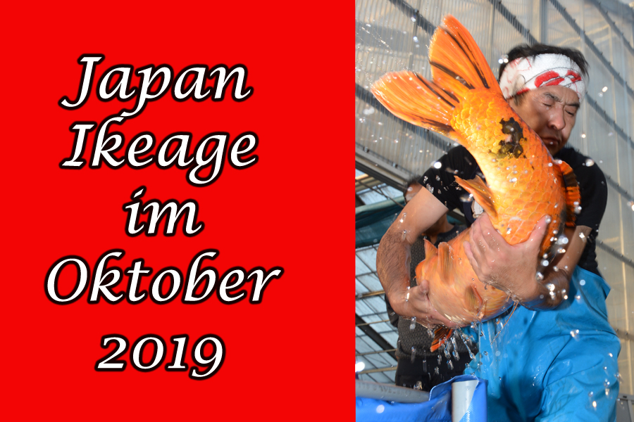 Japan_Ikeage_koinet